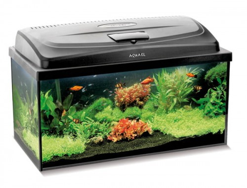 Zestaw Akwarystyczny Aquael Classic Box 80 Akwarium 112l Pokrywa Led